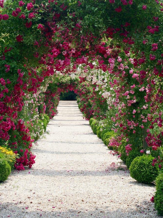 Paisagem do jardim de rosas imagens de stock royalty free