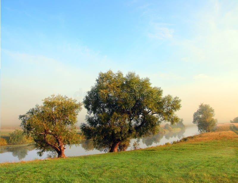 Paisagem do lago com as árvores na névoa fotografia de stock royalty free