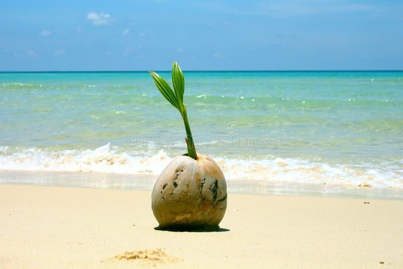 Paisagem do mar da natureza do crescimento da areia da plântula do coco imagens de stock