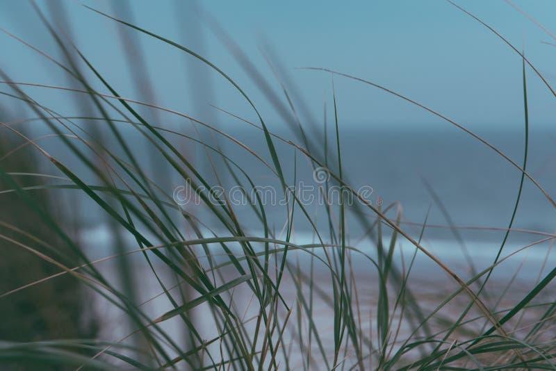 Paisagem do mar, dunas, Ameland Holanda de wadden, ilha os Países Baixos fotografia de stock