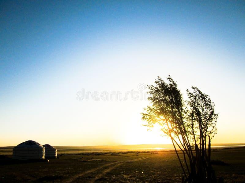 Paisagem do Mongolian com árvores e Yurt fotografia de stock royalty free