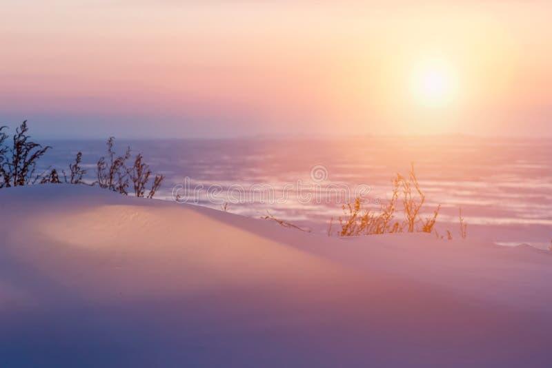 Paisagem do Natal do inverno em tons cor-de-rosa com o rio calmo do inverno, cercado por árvores Floresta do inverno no rio no po imagem de stock