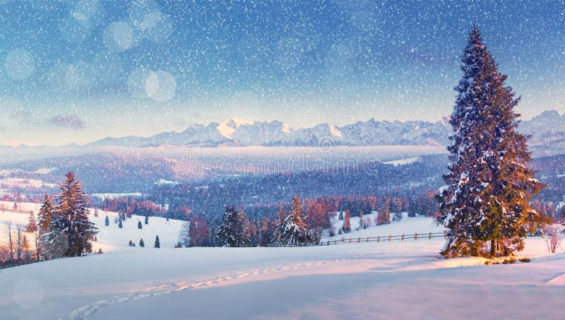 Paisagem do Natal Queda de neve do Natal Manhã bonita do inverno nas montanhas imagem de stock royalty free