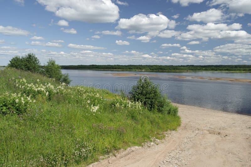 Paisagem do norte do verão, rio de Pinega, região de Arkhangelsk imagem de stock royalty free
