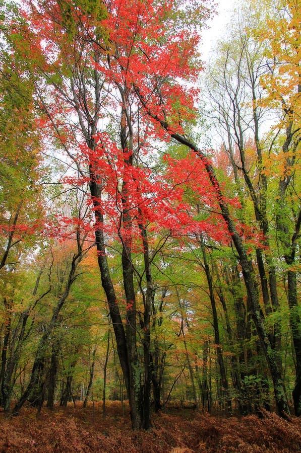 Paisagem do outono imagens de stock