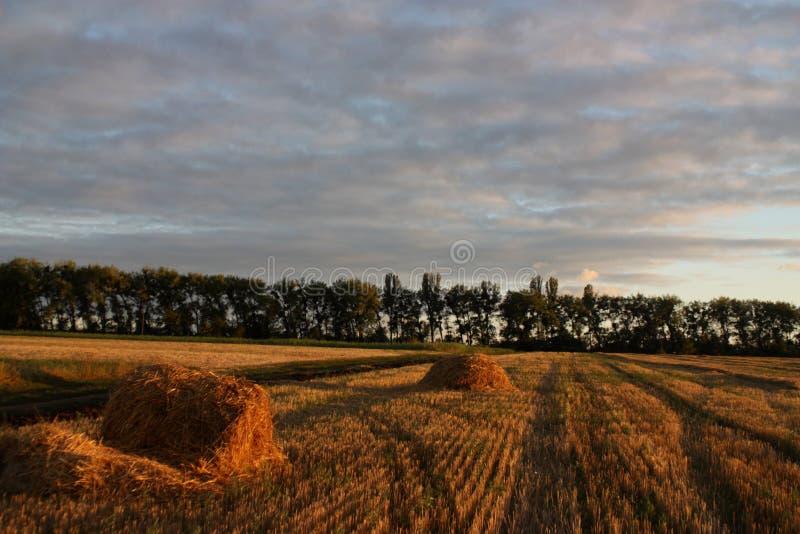 Paisagem do outono do campo de trigo foto de stock