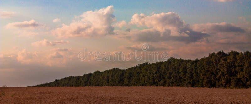 Paisagem do outono do campo de trigo fotos de stock royalty free