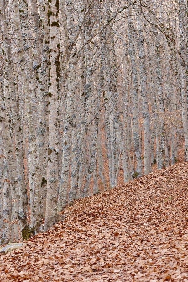 A paisagem do outono com floresta da faia sae na terra spain imagens de stock royalty free