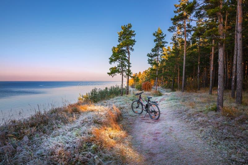 Paisagem do outono com a montanha que Biking perto do rio O Ob Riv fotografia de stock royalty free