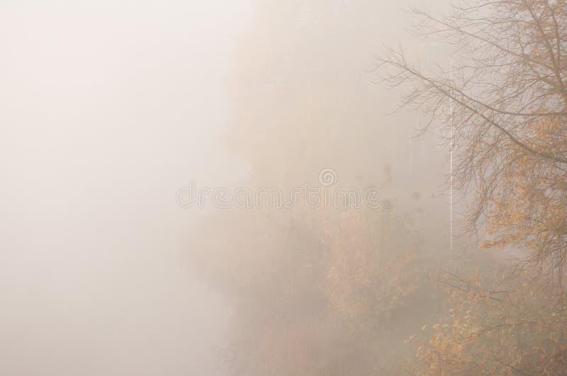 A paisagem do outono com névoa grossa e as árvores coloridas na cidade estacionam no nascer do sol fotografia de stock