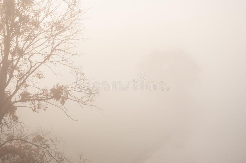 A paisagem do outono com névoa grossa e os ramos das árvores na cidade estacionam no nascer do sol imagens de stock