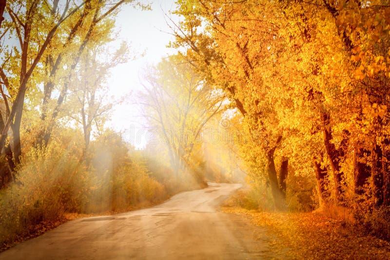 Paisagem do outono com raios ensolarados fotos de stock
