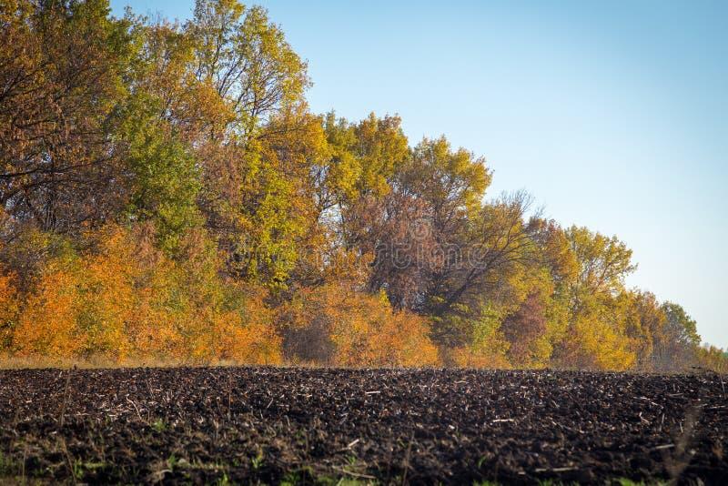Paisagem do outono com terra arável e as árvores amarelas fotos de stock