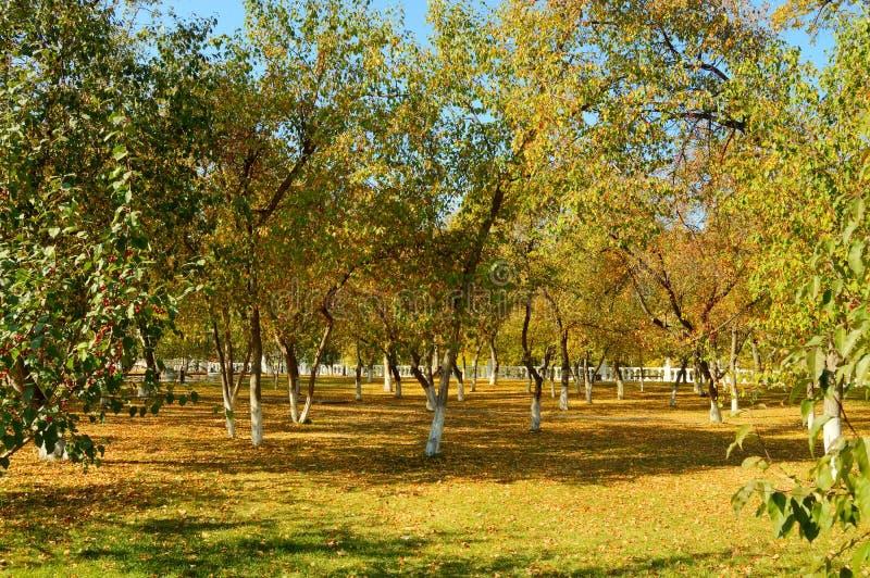 Paisagem do outono de um parque velho fotografia de stock royalty free