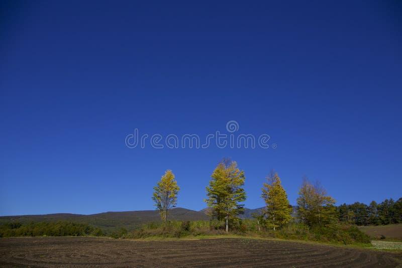 Paisagem do outono em Japão imagens de stock
