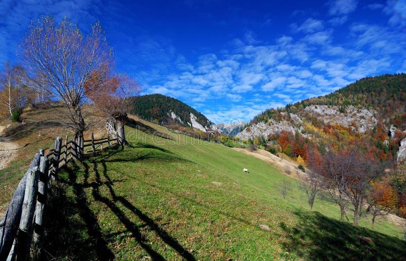Download Paisagem Do Outono Em Montanhas Carpathian Foto de Stock - Imagem de wooden, paisagem: 16851258