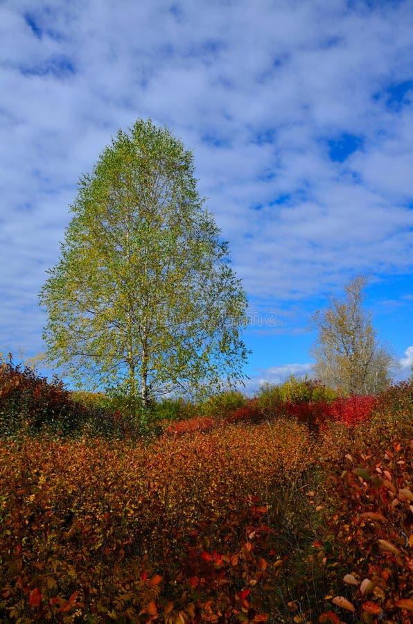 Paisagem do outono em Sibéria imagens de stock royalty free