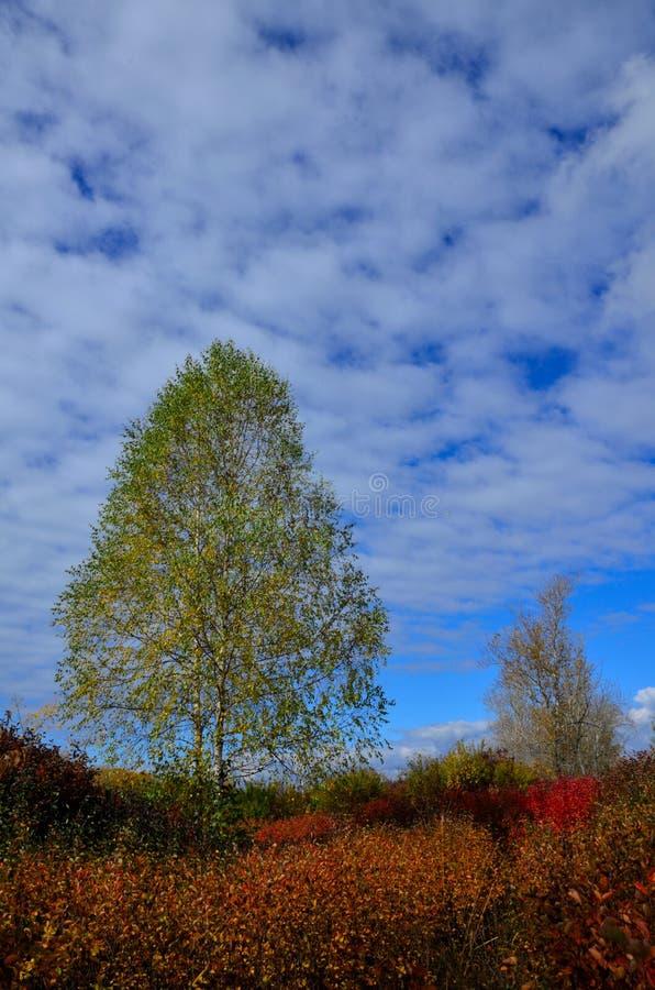Paisagem do outono em Sibéria fotos de stock royalty free