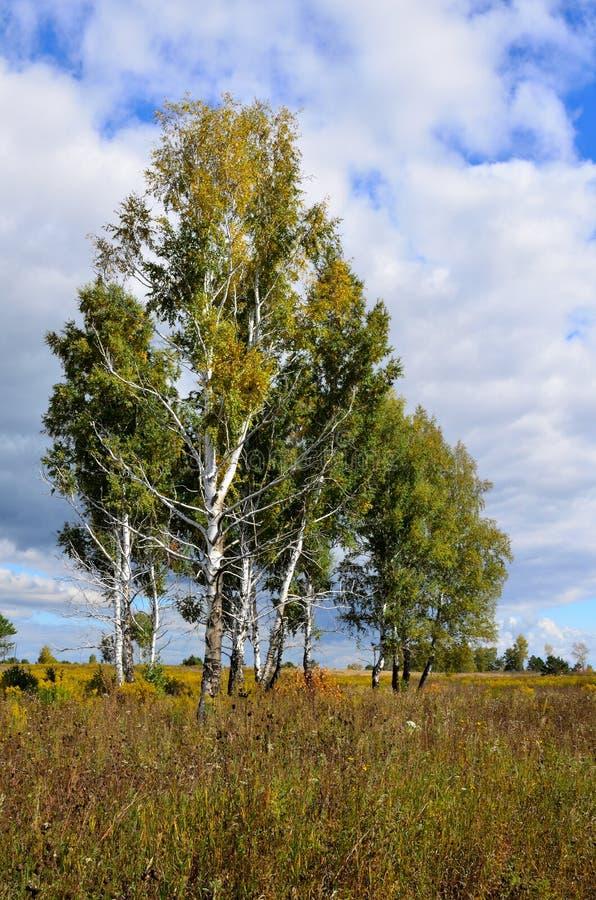 Paisagem do outono em Sibéria imagem de stock royalty free