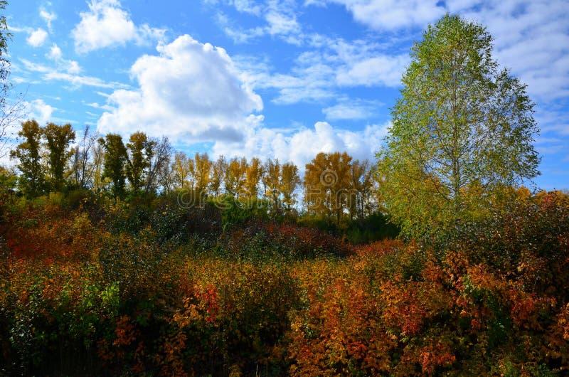 Paisagem do outono em Sibéria fotos de stock