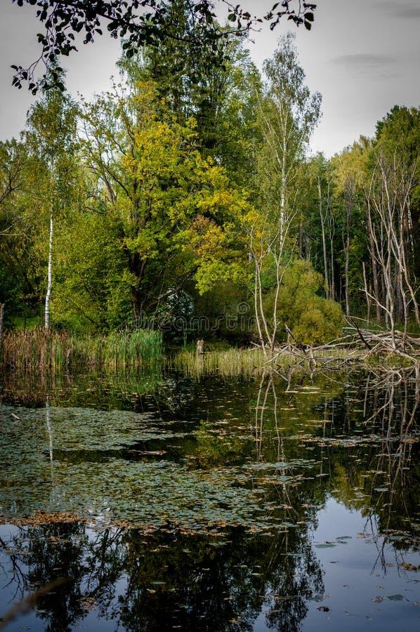 Paisagem do outono em um lago em Rússia central imagem de stock