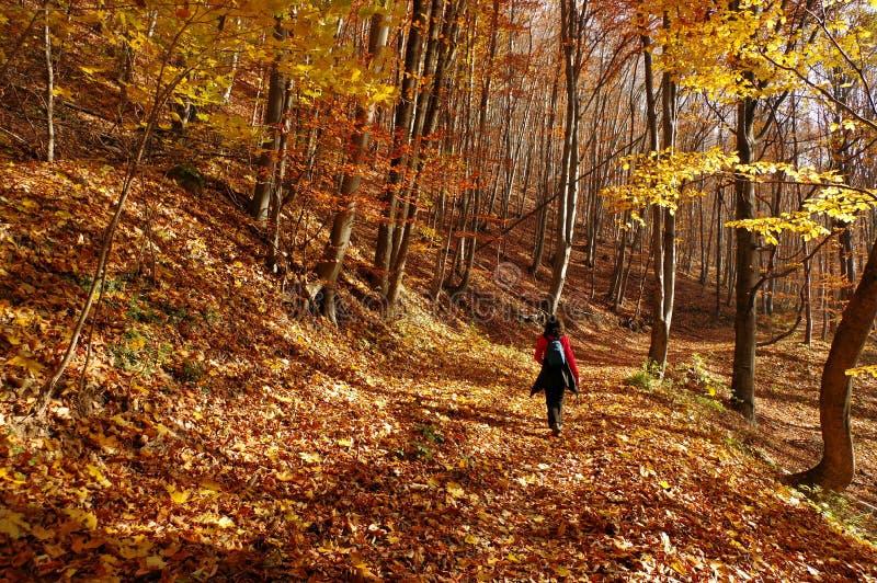 Paisagem do outono na floresta fotografia de stock