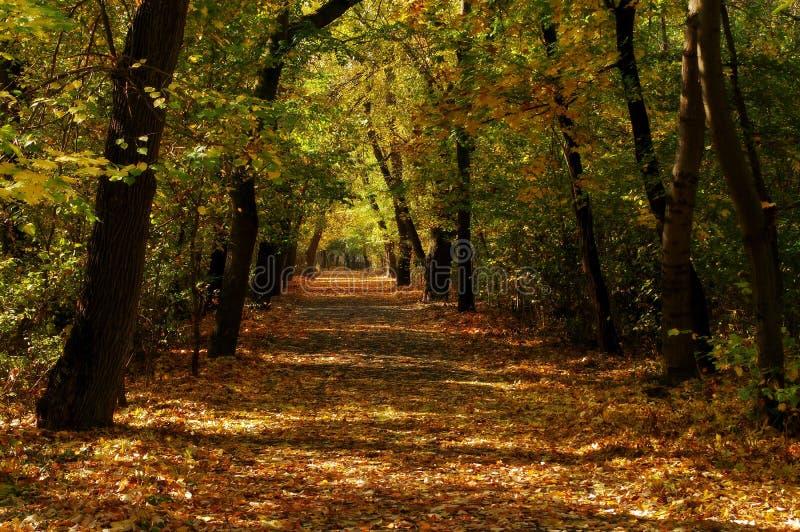 Paisagem do outono no parque imagem de stock
