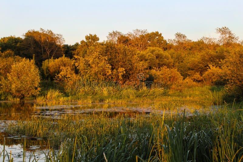 Paisagem do outono no parque com rio e o c?u azul fotos de stock