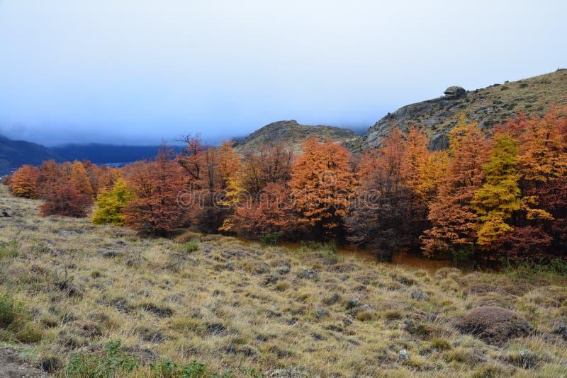 Paisagem do outono no Patagonia Argentina do EL Chalten imagens de stock royalty free