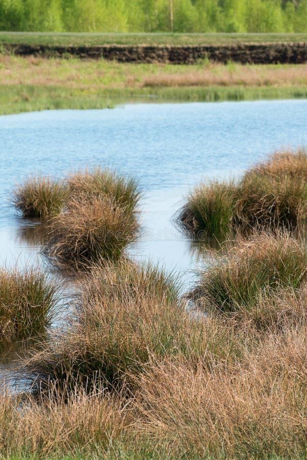 A paisagem do pântano com amarra a grama na água em uma área de mineração da turfa imagens de stock royalty free