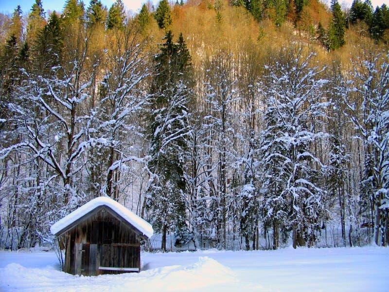 Paisagem do país das maravilhas do inverno fotografia de stock royalty free