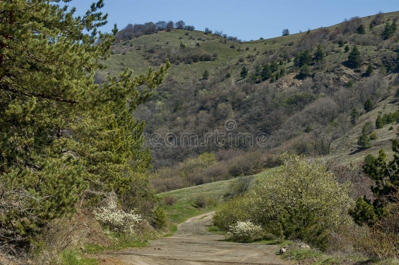 Paisagem do panorama da primavera com pinho ou pinus e floresta decíduo fotos de stock royalty free