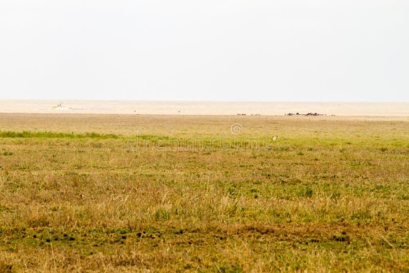 Paisagem do parque nacional de Serengeti, tanzaniano imagens de stock