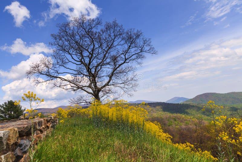 Paisagem do parque nacional de Shenandoah imagens de stock royalty free