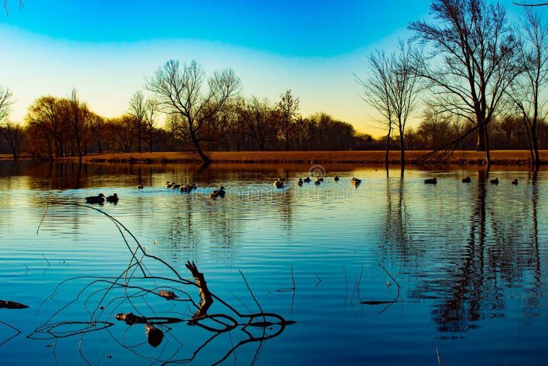 Paisagem do por do sol com lago e os patos azuis fotos de stock royalty free