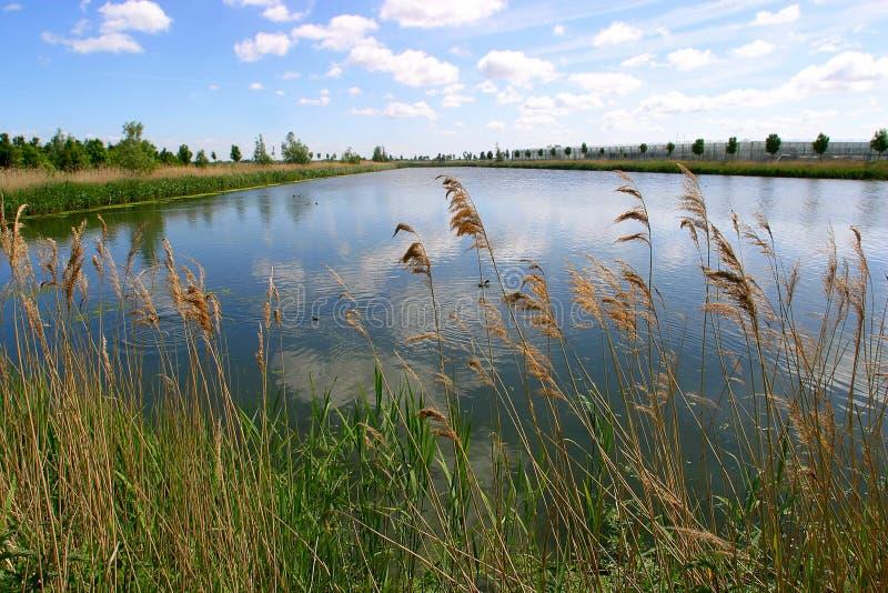 paisagem do rio imagens de stock royalty free