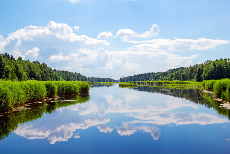 Paisagem do rio da floresta foto de stock royalty free