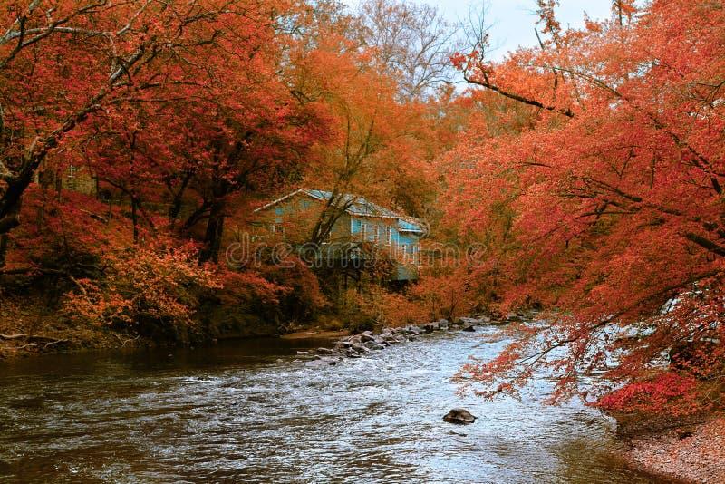 Paisagem do rio da floresta do outono com casa azul imagens de stock