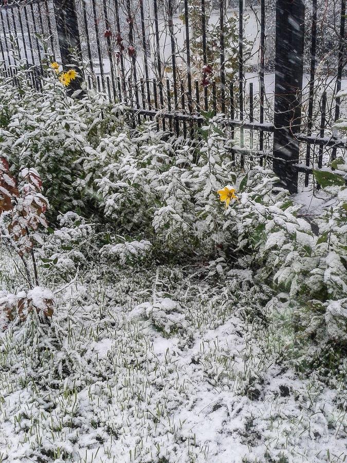 Paisagem do russo no inverno fotos de stock