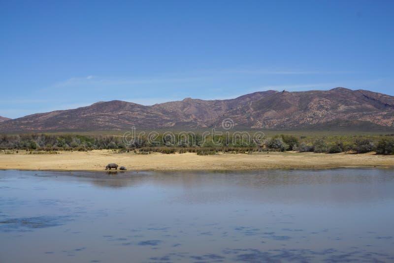 Paisagem do safari de África com o backgrou do rio, do prado e da montanha imagens de stock