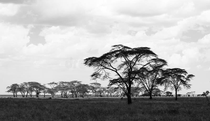 Paisagem do savana com pastagem e árvores, Tanzânia fotografia de stock