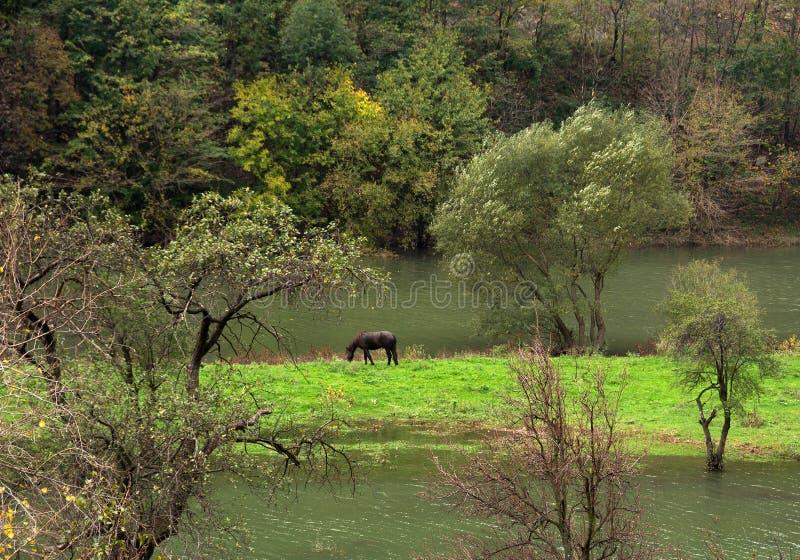 Paisagem do vale de Cerna no outono imagem de stock