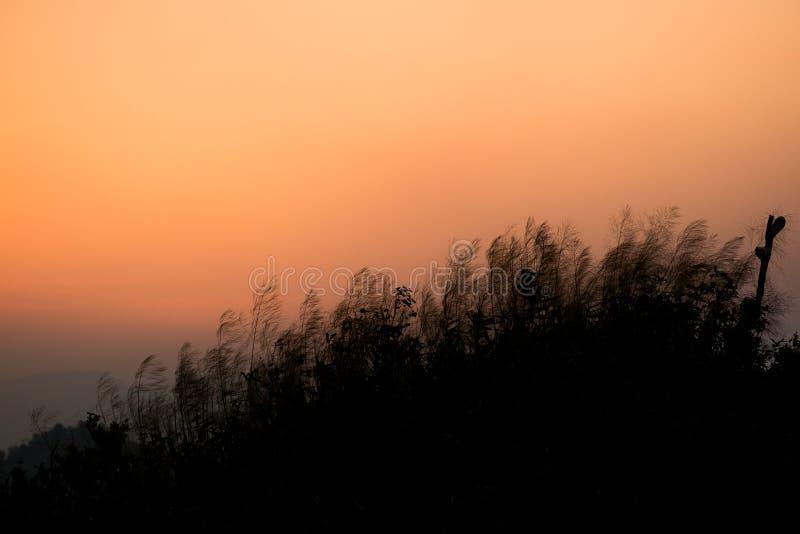 A paisagem do vale nevoento da floresta do outono, fundo místico do vale Silhuetas em uma névoa da manhã, cores azuis dos pinheir imagens de stock