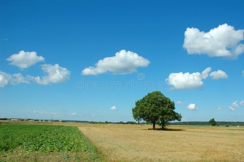 Paisagem do verão com árvore fotografia de stock royalty free