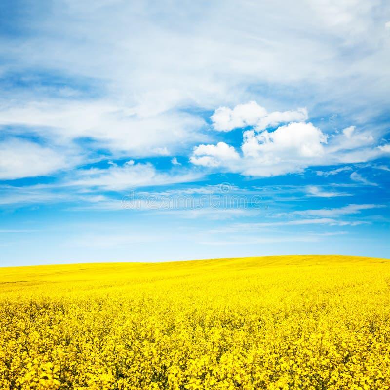 Paisagem do verão com campo da violação e o céu azul fotografia de stock royalty free