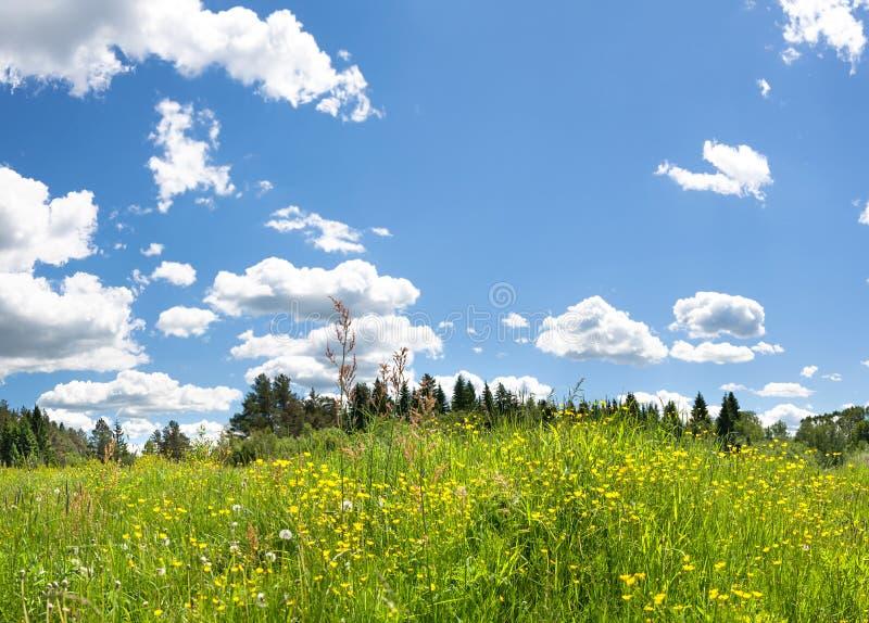 Paisagem do verão com florescência de flores selvagens no prado fotos de stock