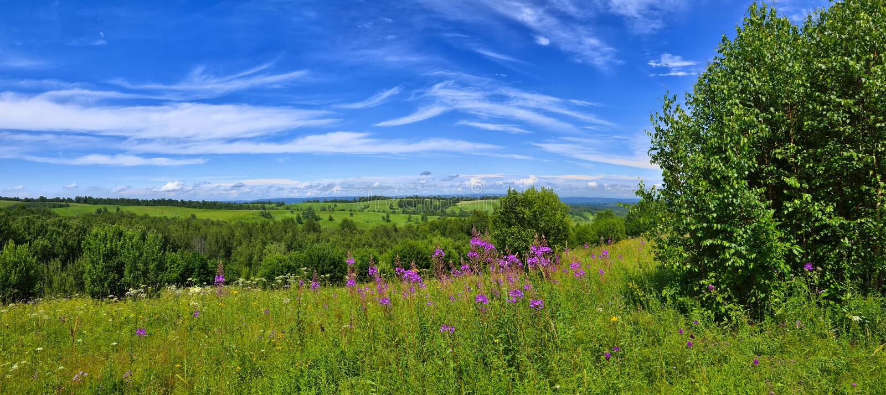 Paisagem do verão com o prado de florescência fotos de stock