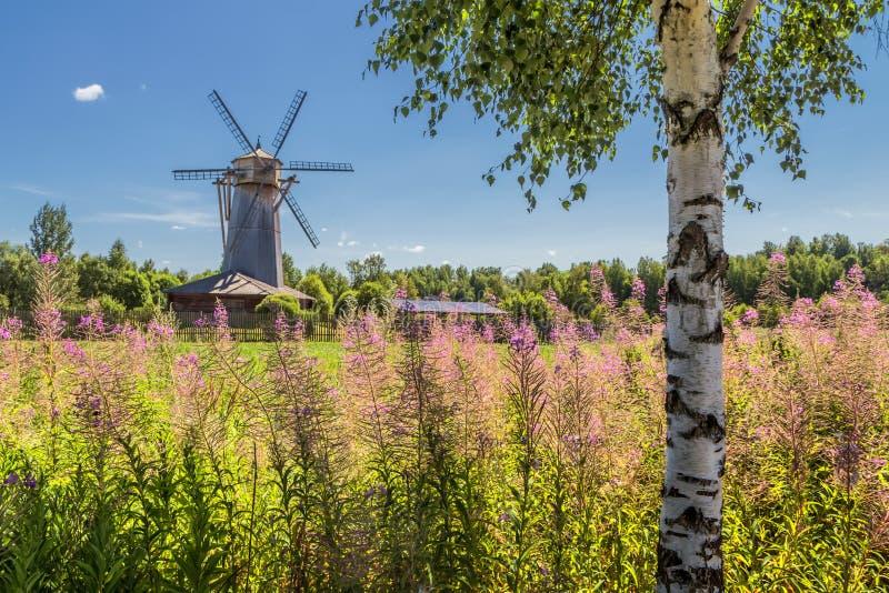 Paisagem do verão com um moinho e um vidoeiro imagens de stock royalty free