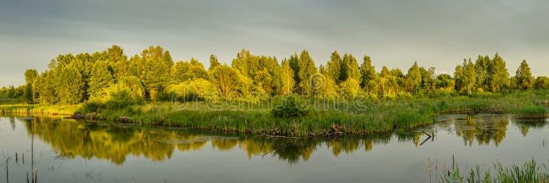 a paisagem do verão da noite vista panorâmica da costa pantanoso na luz morna do sol de ajuste fotografia de stock royalty free