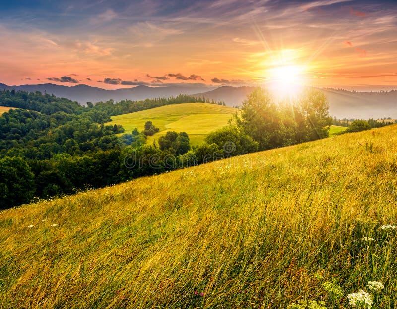 Paisagem do verão do campo com o campo, a floresta e a montanha livrados fotos de stock royalty free